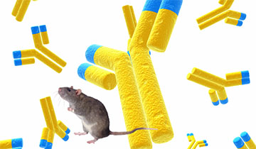 Rat Monoclonal Antibody Production