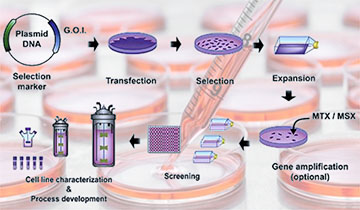 Stable Cell Line Development Services